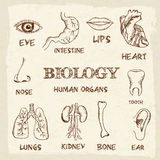Human organs in sketches style set. Vector Stock Image