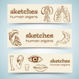 Human organs in sketches style set. Vector Royalty Free Stock Images