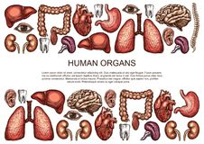 Human organs vector sketch body anatomy poster. Human body anatomy sketch poster of internal organs of digestive, respiratory and vital system. Vector medical Stock Photos