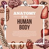 Human organs vector sketch body anatomy poster royalty free illustration