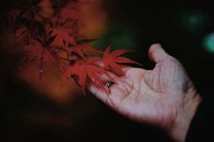 Hand with leaf stock images