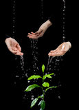 Human palms caring about green plant Royalty Free Stock Image