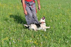 Human playing and training commnads the dog Royalty Free Stock Photography