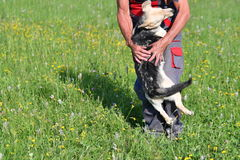 Human playing and training commnads the dog. Human playing and training the dog Stock Photography