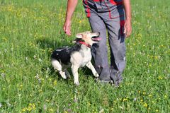 Human playing and training commnads the dog. Human playing and training the dog Royalty Free Stock Images