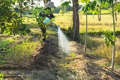 Human pouring a plant from watering can. Gardening and watering. Plants royalty free stock photos