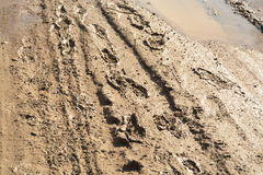 Human Prints on Clayey Road Stock Images