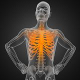 Human radiography scan Stock Image