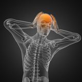 Human radiography scan. Made in 3D Stock Photography