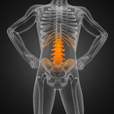 Human radiography scan Stock Photo