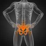 Human radiography scan. Made in 3D Royalty Free Stock Images