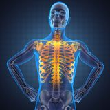 Human radiography scan. Made in 3D Stock Image