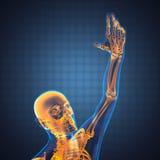 Human radiography scan royalty free illustration