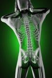 Human radiography scan Stock Photography