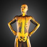 Human radiography scan. Made in 3D Royalty Free Stock Photos