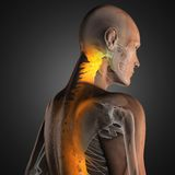 Human radiography scan. Made in 3D Royalty Free Stock Image