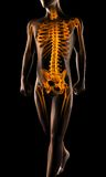 Human radiography scan Royalty Free Stock Photography