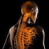 Human radiography scan. On black Royalty Free Stock Image
