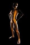 Human radiography scan Stock Photo
