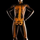 Human radiography scan Royalty Free Stock Images