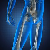Human radiography scan on blue background Stock Photos