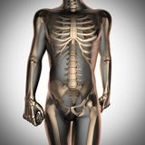 Human radiography scan  with bones Royalty Free Stock Photos