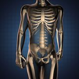 Human radiography scan  with bones. 3D rendered Stock Photography