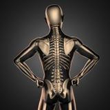 Human radiography scan  with bones Stock Photos
