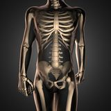 Human radiography scan  with bones Royalty Free Stock Photo