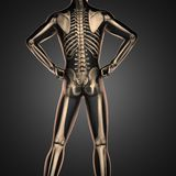 Human radiography scan  with bones. 3D rendered Stock Images