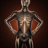 Human radiography scan  with bones Royalty Free Stock Image
