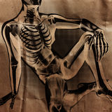 Human radiography scan  with bones painted Stock Photography