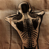 Human radiography scan  with bones painted Stock Image