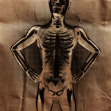 Human radiography scan  with bones painted Royalty Free Stock Image
