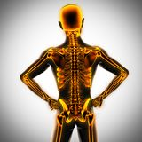 Human radiography scan  with glowing bones Stock Image