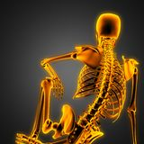 Human radiography scan  with glowing bones Stock Images