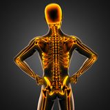 Human radiography scan  with glowing bones Royalty Free Stock Image