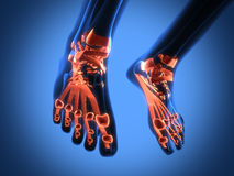 Human radiography scan of legs. See my other works in portfolio Stock Photos