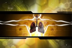 Human respiratory system with lungs royalty free illustration
