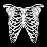 Human ribcage hand drawn line art anatomically correct. White over black background vector illustration. Print design for t-shirt. Or halloween costume royalty free illustration