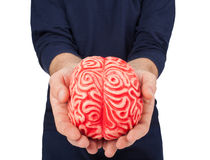 Human rubber brain between the hands Royalty Free Stock Photo