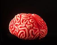 Human rubber brain Stock Photography