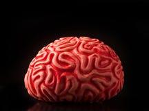Human rubber brain Stock Photos
