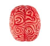Human rubber brain Royalty Free Stock Photo