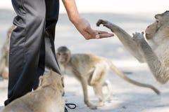 Human's hand feed monkey Royalty Free Stock Photography