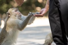 Human's hand feed monkey Royalty Free Stock Images