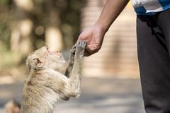Human's hand feed monkey Royalty Free Stock Photos