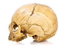 Human Scull Royalty Free Stock Photos