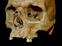 Human Scull Royalty Free Stock Image