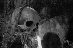 Human scull hanging on rope black and white. Death symbol. Fear and horror concept. Spooky scull isolated. royalty free stock images